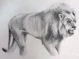 dessin-de-lion.jpg