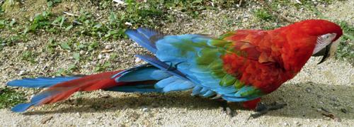 04-perroquet.JPG