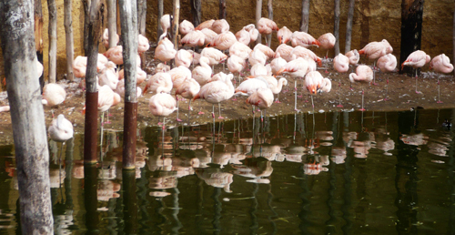 05-flamants-roses.JPG