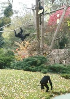 17-gorilles.jpg