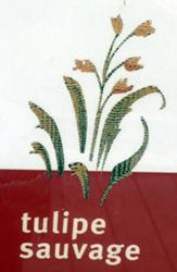b500-tulipe-sauvage.jpg