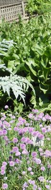 jardin-medieval-de-cluny-motif-4.jpg